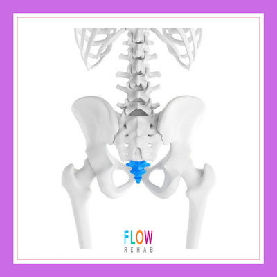Coccyx Flow Branded Small.png