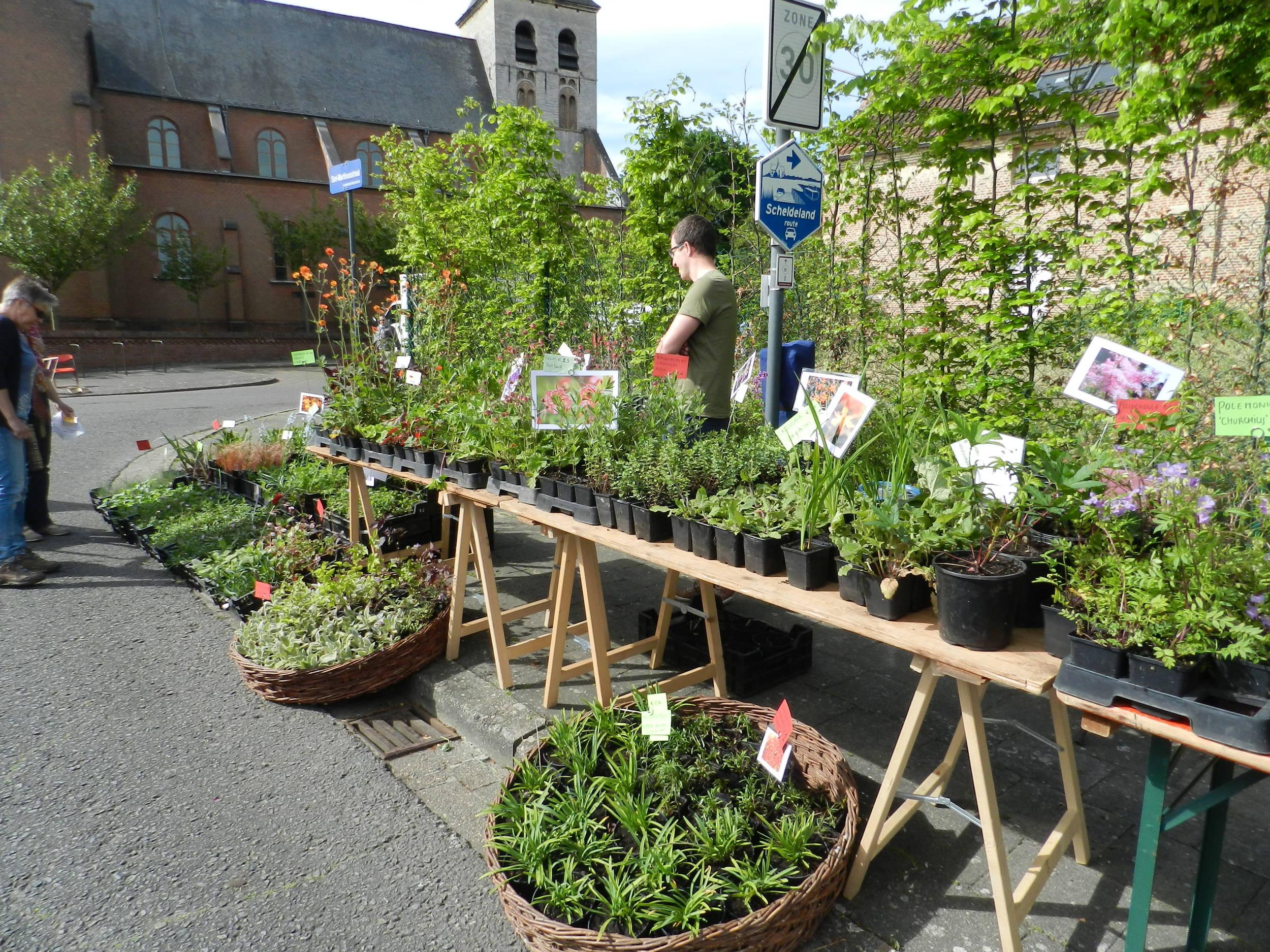Plantenbeurs Hombeek