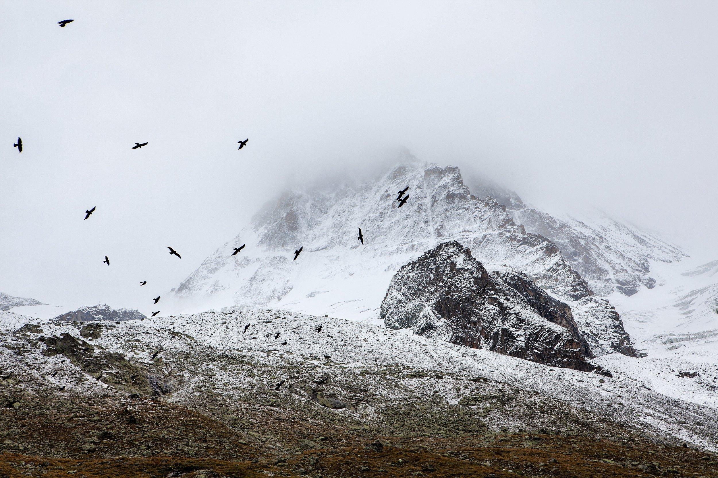 birds and mountains SOS.jpg