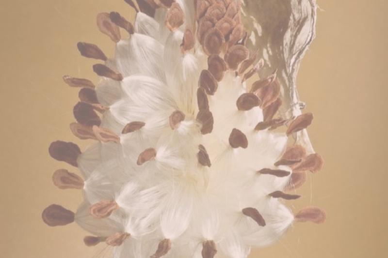 BEGINNER NIDRA-PLANTING THE SEED