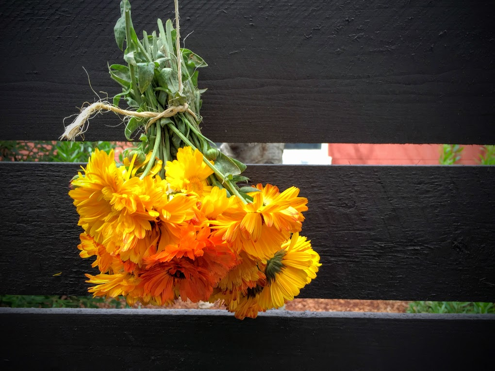 Flowers drying the old-fashioned way.