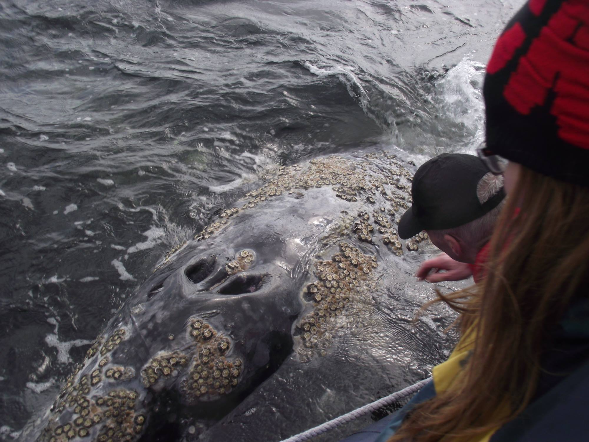 Up close with Whale_taken from SBV facebook page.jpg