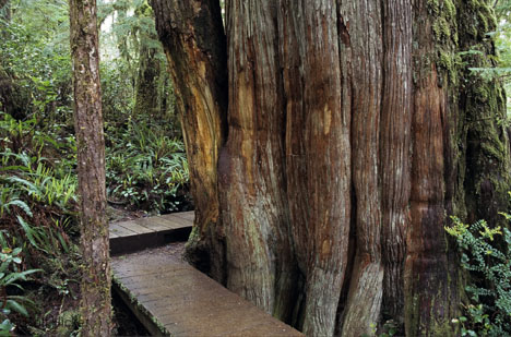 Pacific Rim National Park_forest.jpg