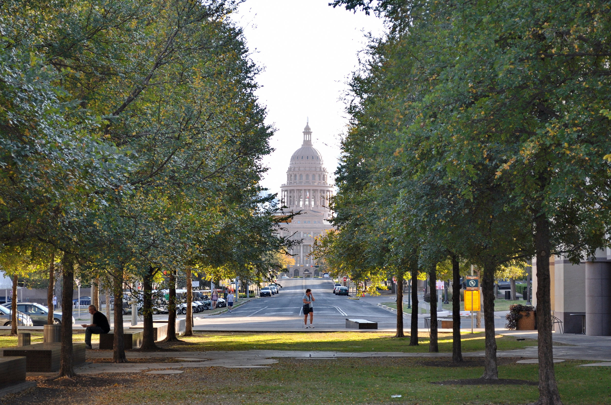 View of State Capitol Framed by Cedar Elm Trees