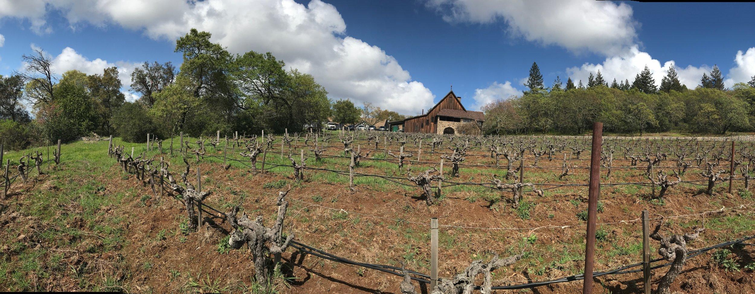 Heritage Vineyard
