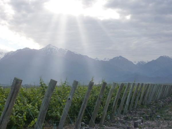 sun-rays-vineyard.jpg