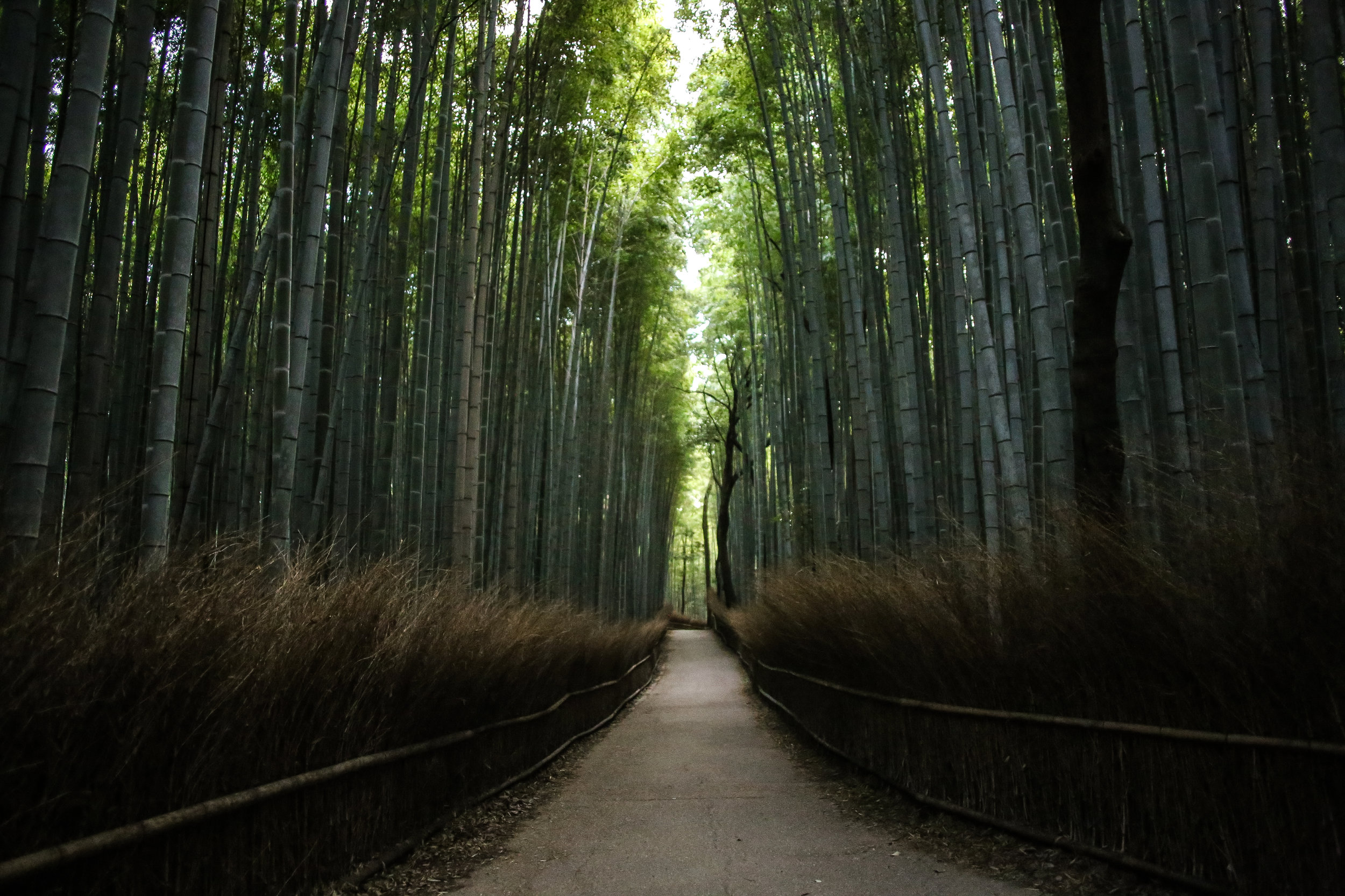 Japan-1242.jpg