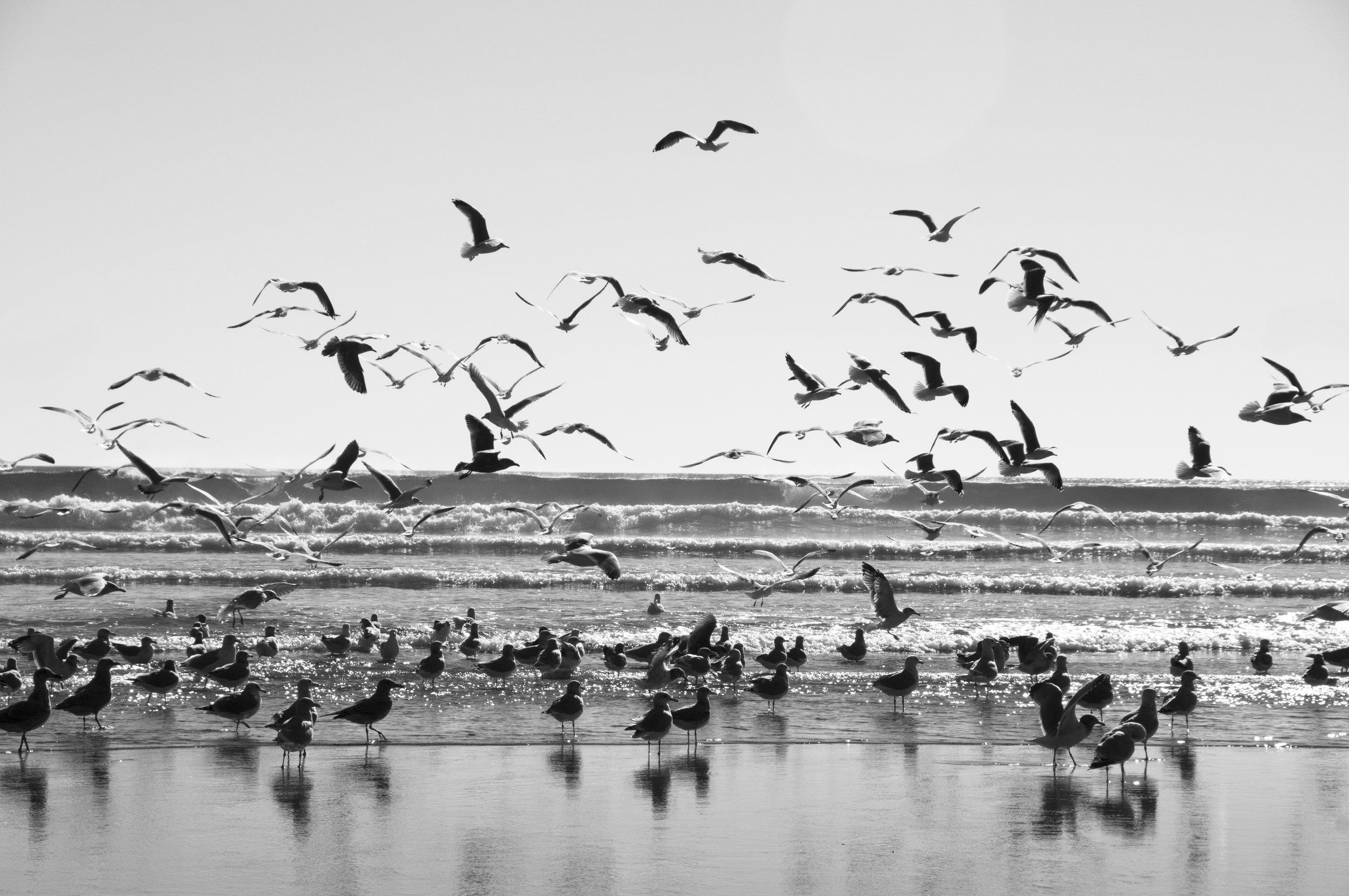 Longbeachbirds.jpg