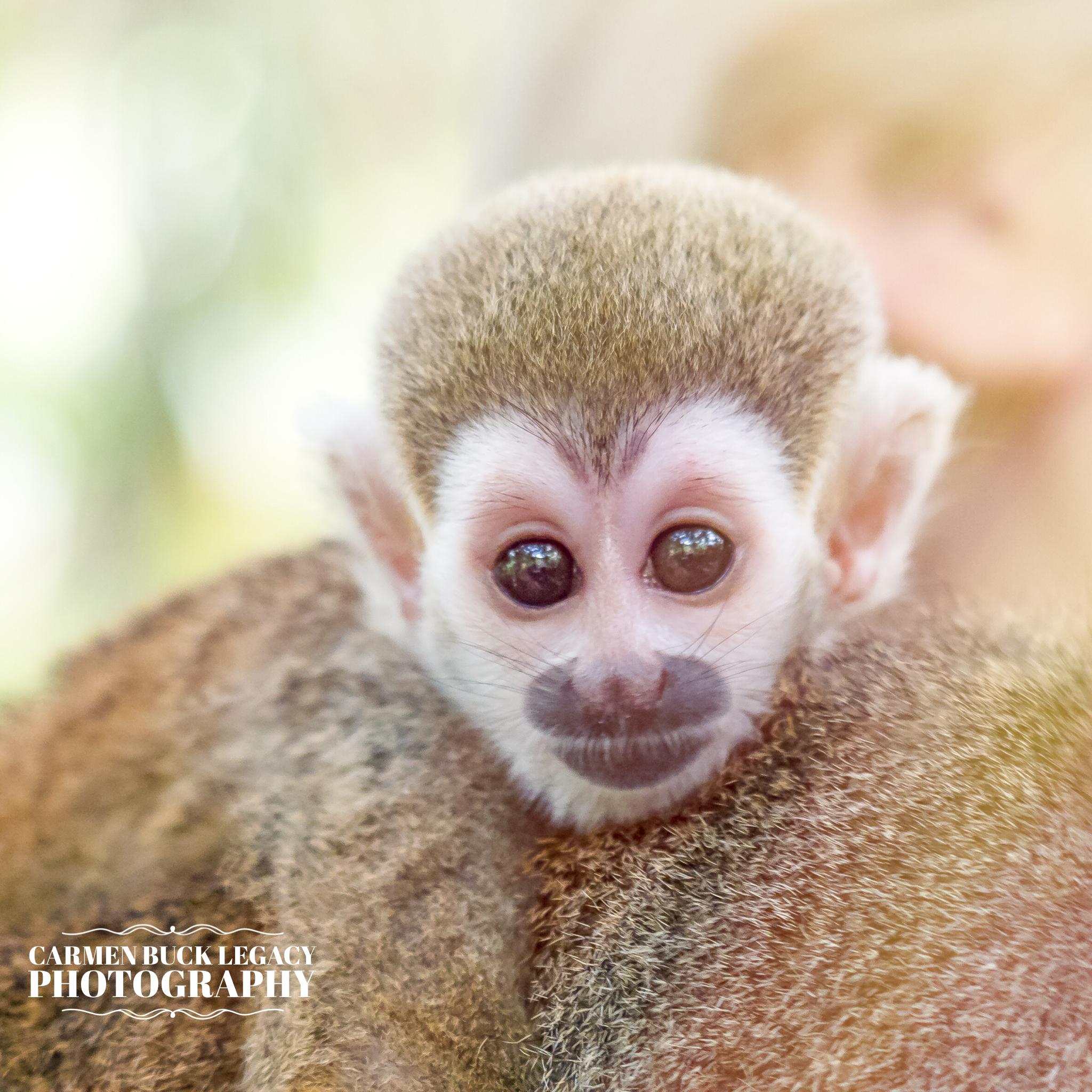 IG-MonkeyJungle-8.jpg