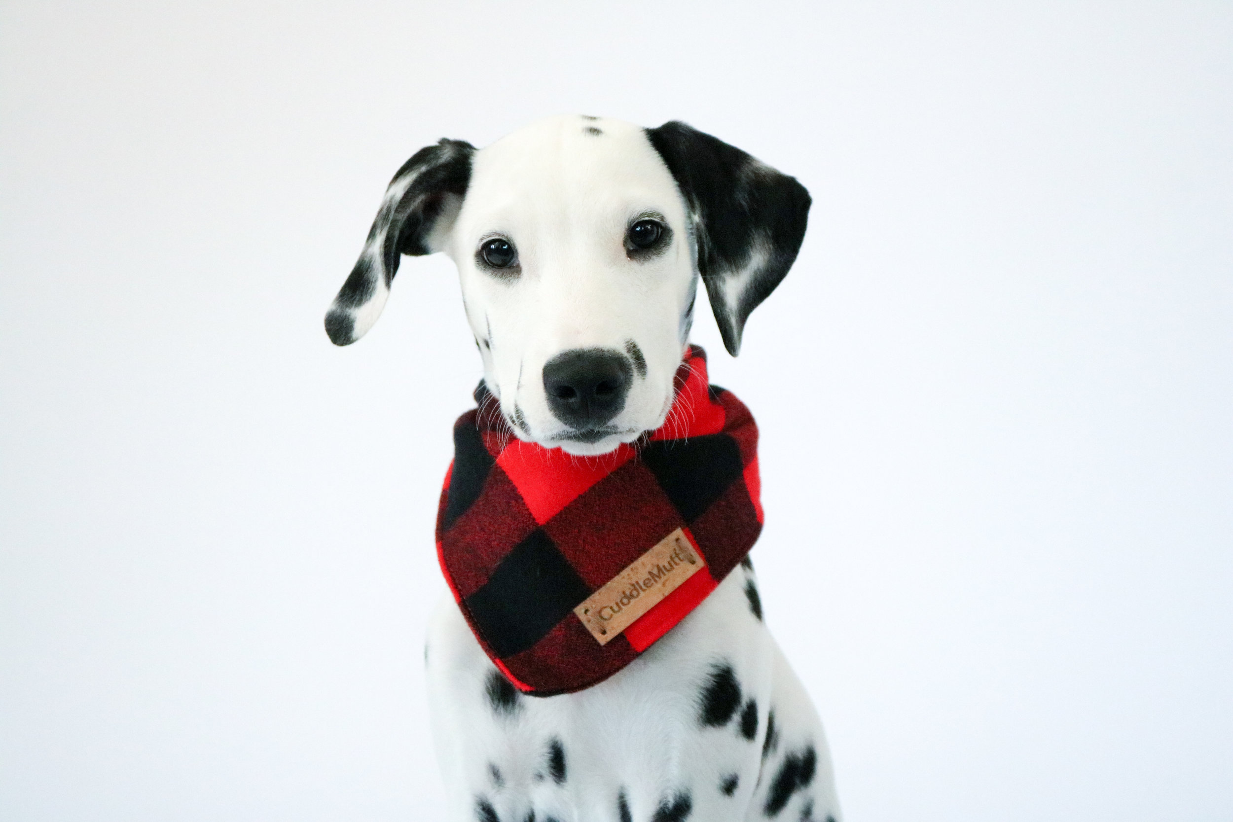 cuddlemutt Kristen Farris dogs accessories founder girlboss black friday product maia community werule we rule