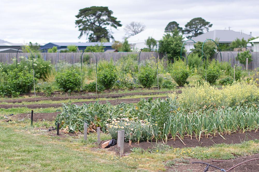 Just some of Annie's massive 'backyard' garden