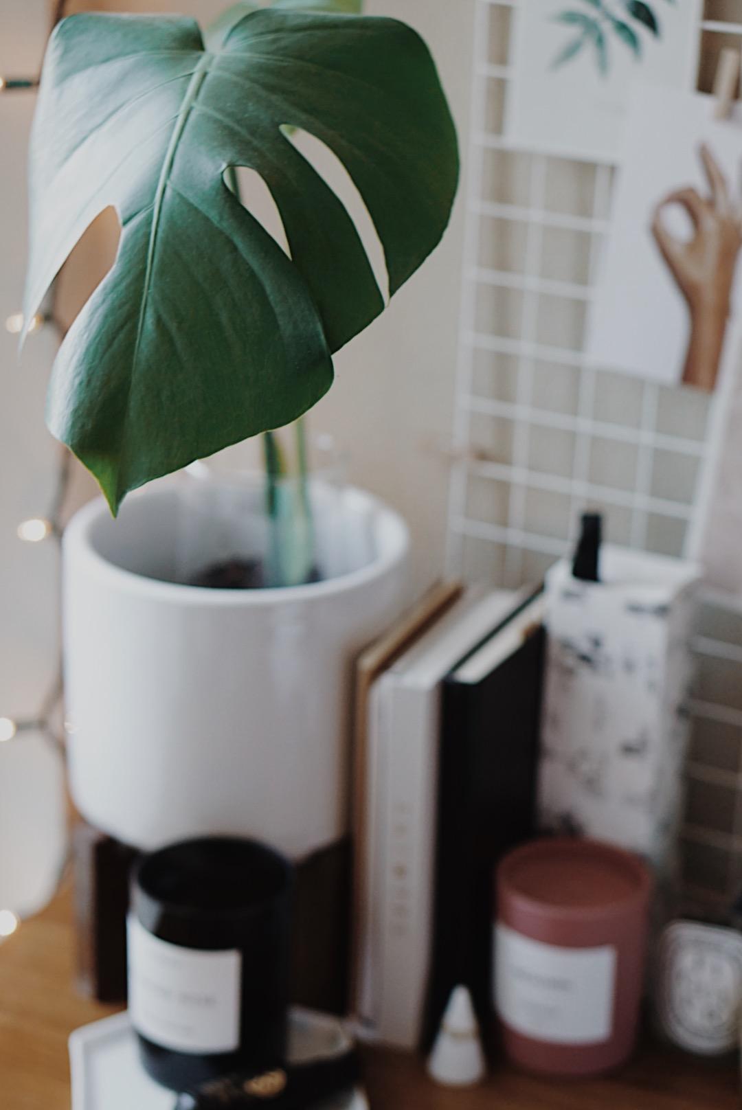 Blogmas Gift Guide Plant Lover