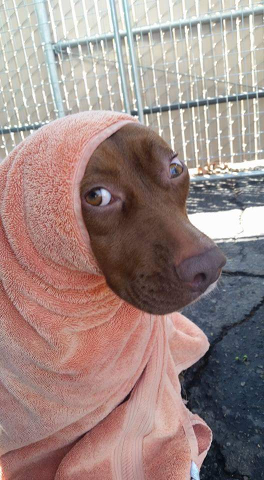 Foster asked us to make sure she got a bath before getting fixed. This was Callie drying off.
