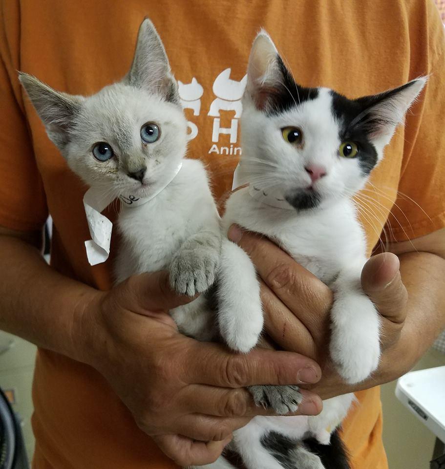 7 city kitties... -