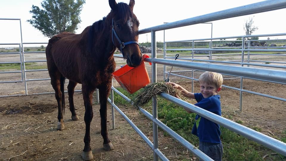 2 neglected horses... -