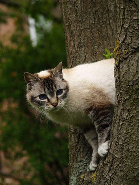 and a cat stuck up in a tree... - Photo Credit: The Nest