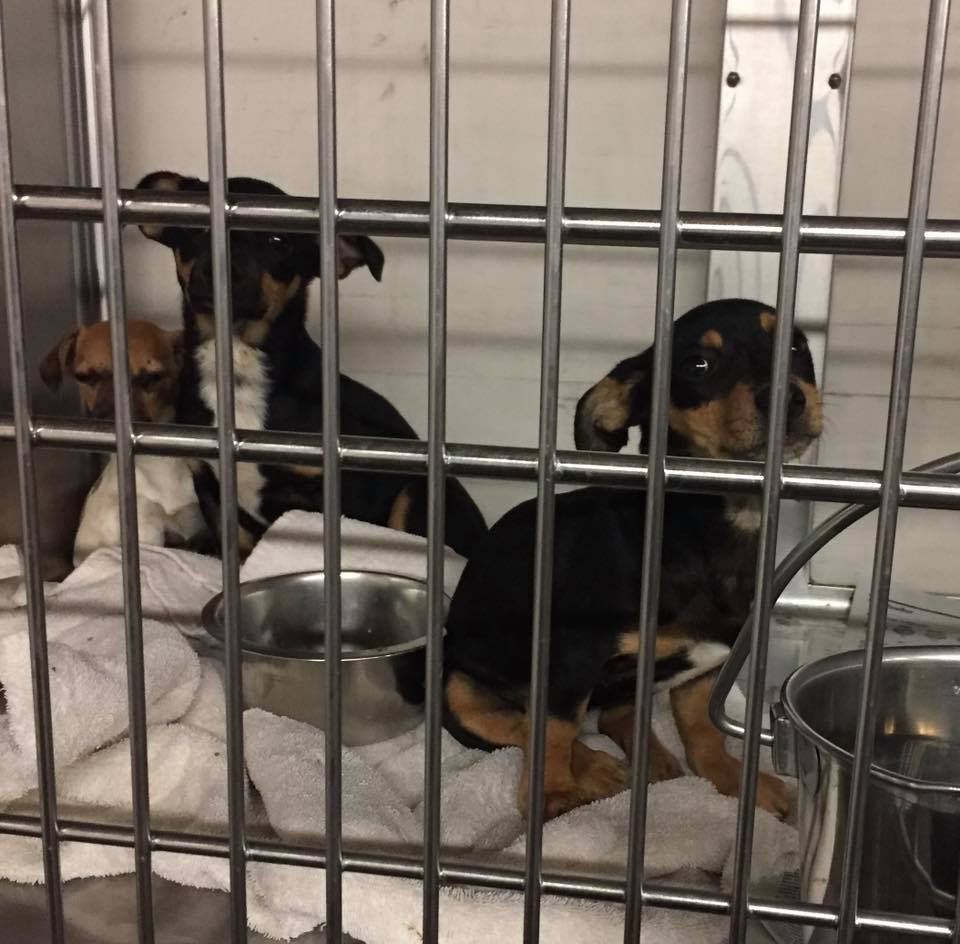 Babies with parvo saved by HSSV