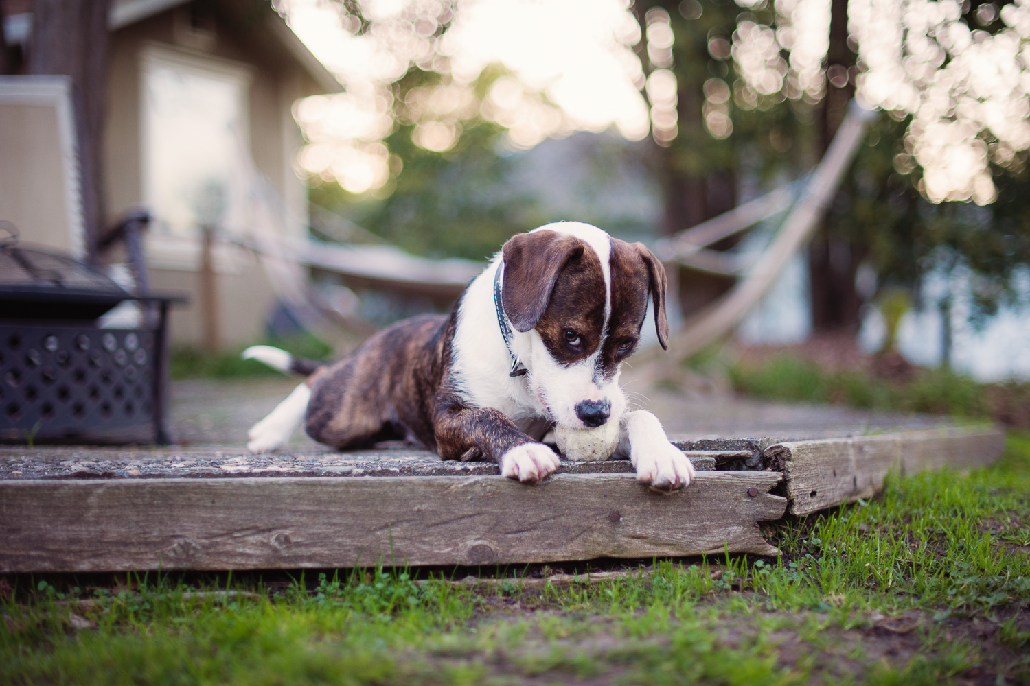 Ruby the rescue // Ashley Petersen Photography