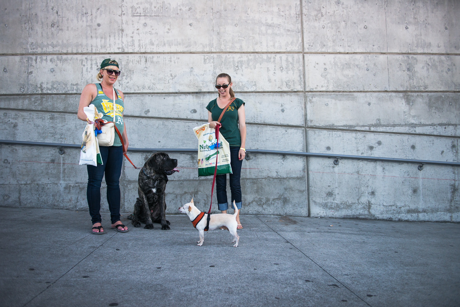 PreGame  // A's Dog Day at the Park // Ashley Petersen Photography