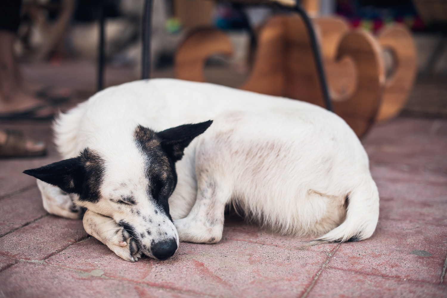 Dog in Sayulita // Ashley Petersen Photo
