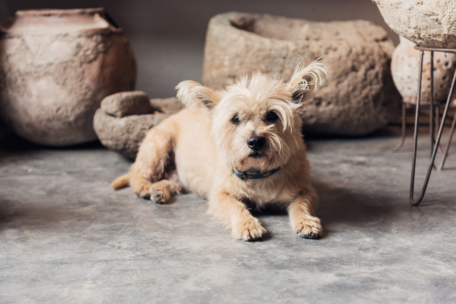 Shop Owner's Dog in Sayulita // Ashley Petersen Photo