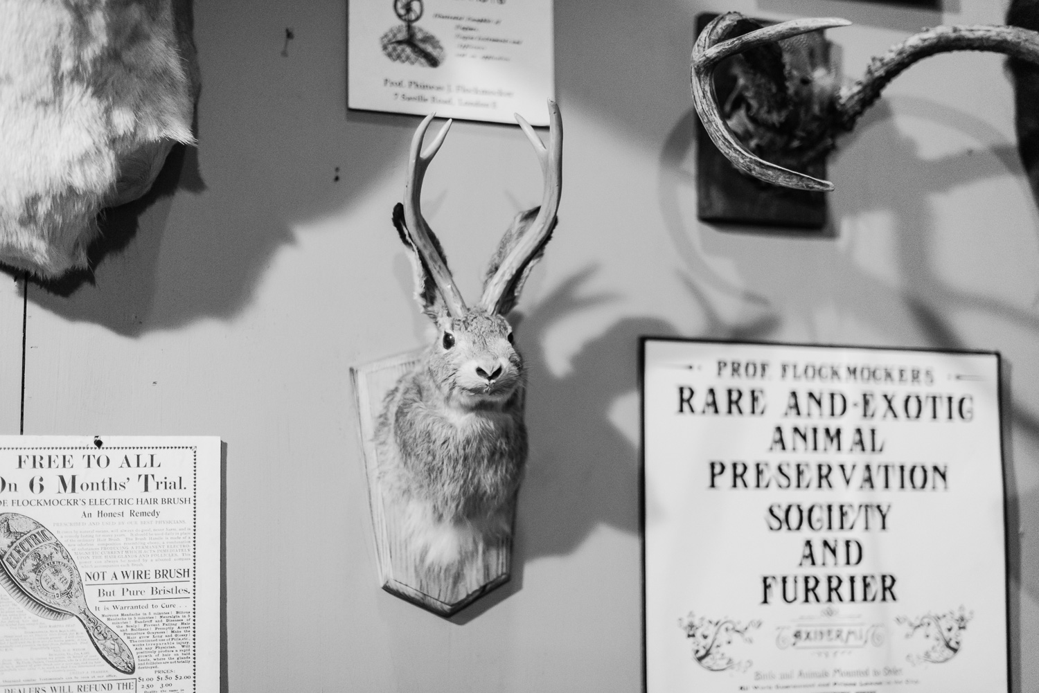 Fur rabbit at Dickens Fair // Ashley Petersen Photo