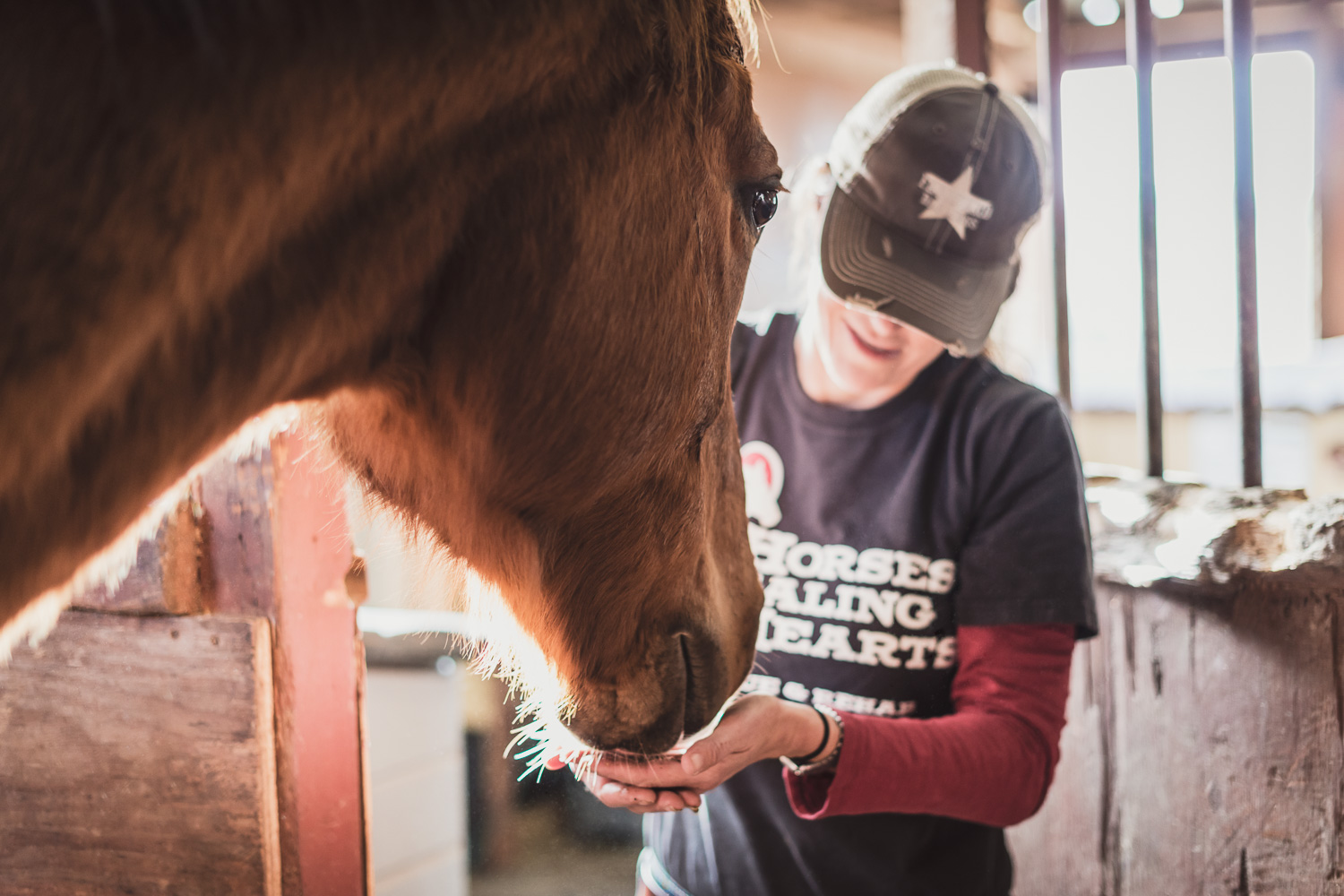 Spirit at Horses Healing Hearts // Ashley Petersen Photo