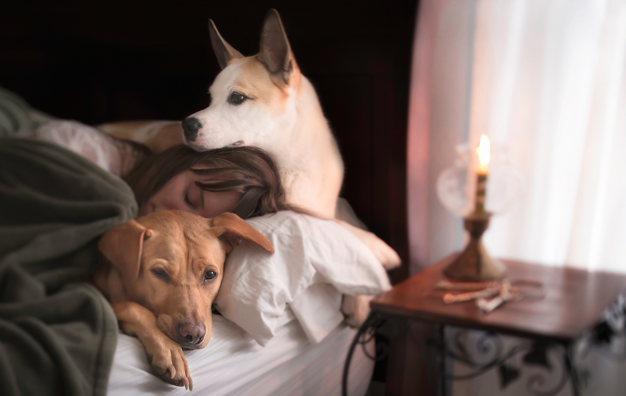 Josie and Cleo the rescued dogs // Rescue Tales  //Ashley Petersen Photography