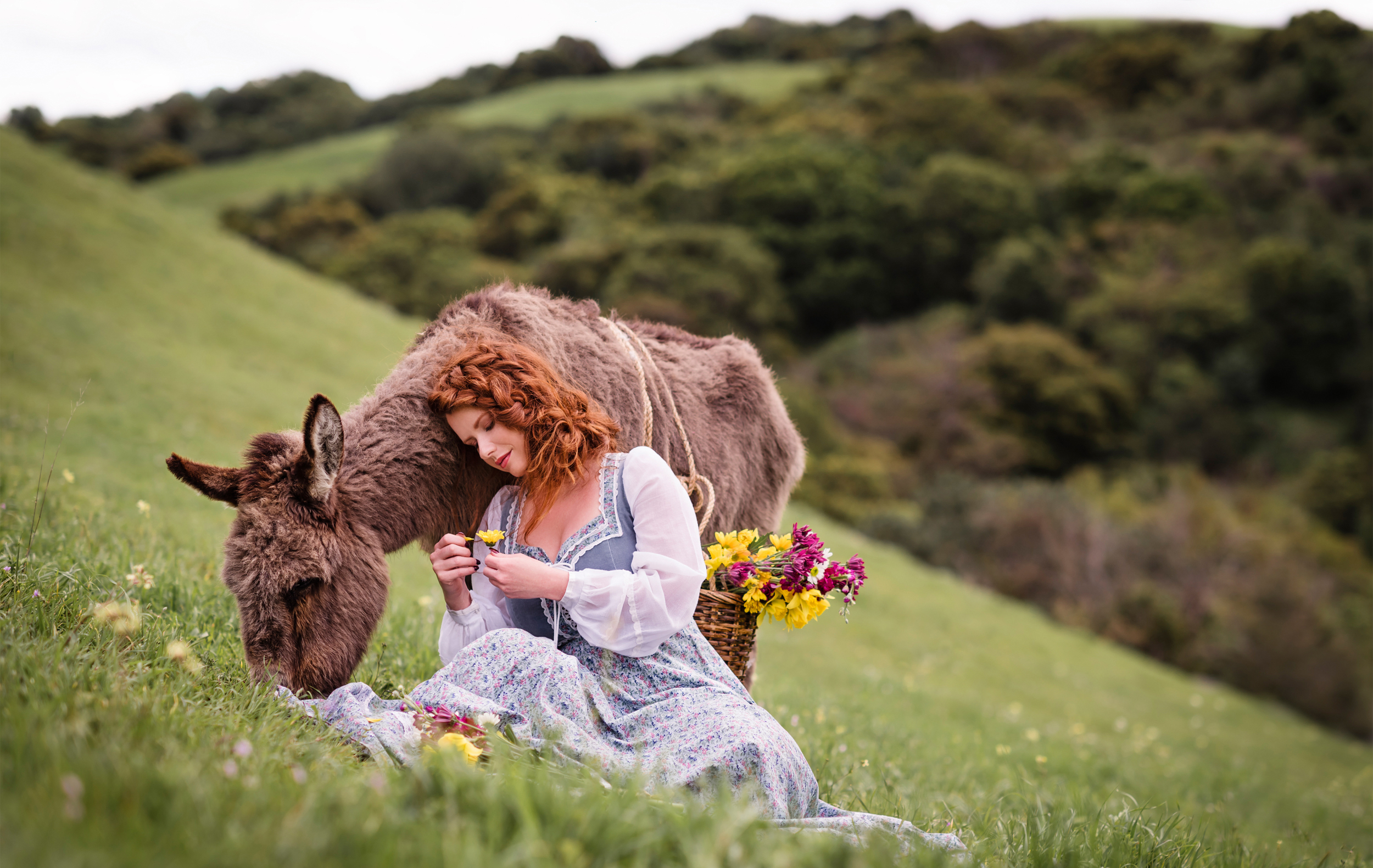 Jenny the rescued donkey //  Rescue Tales   //  Ashley Petersen Photography