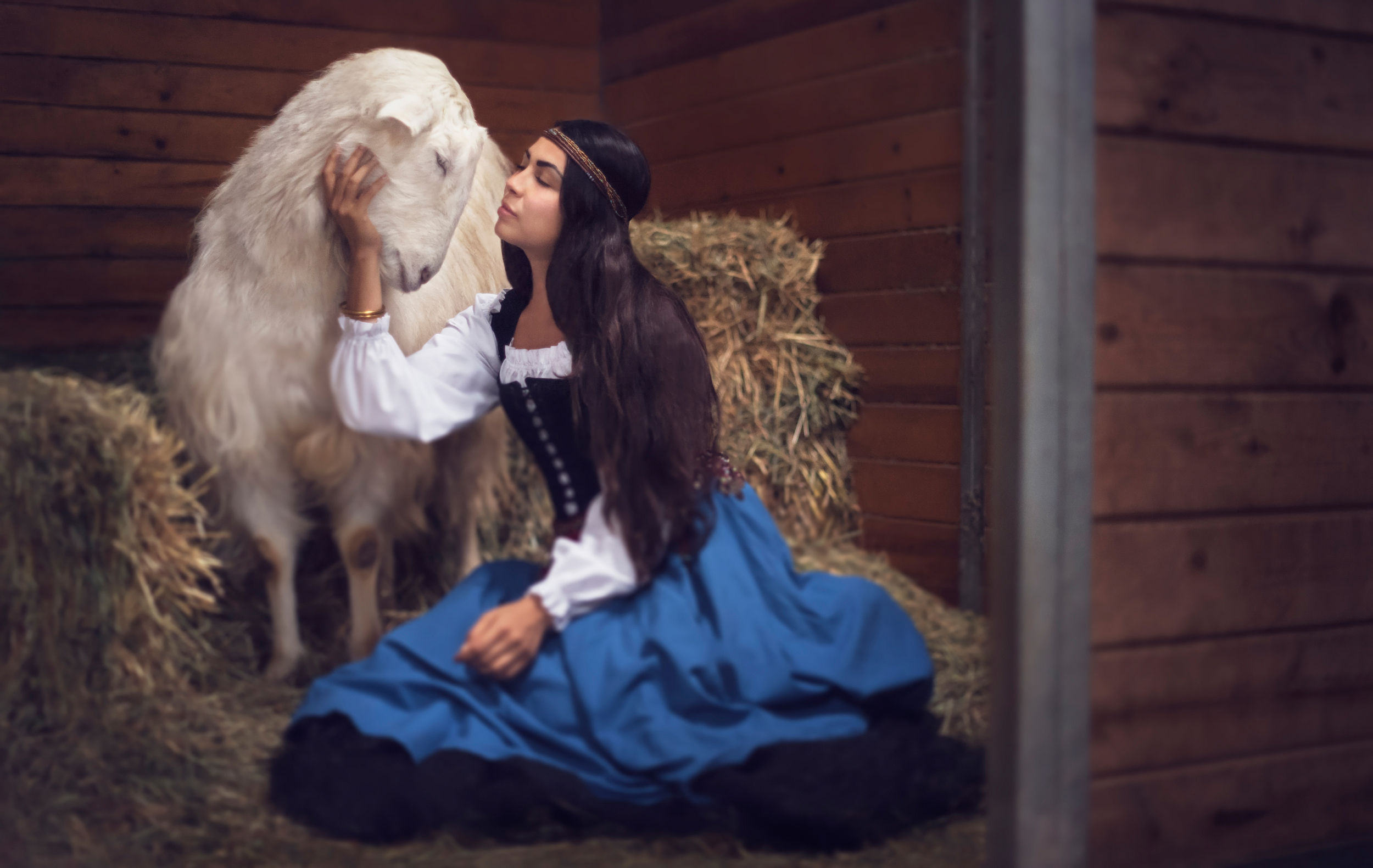 Sundance the rescue goat // Rescue Tales  //Ashley Petersen Photography