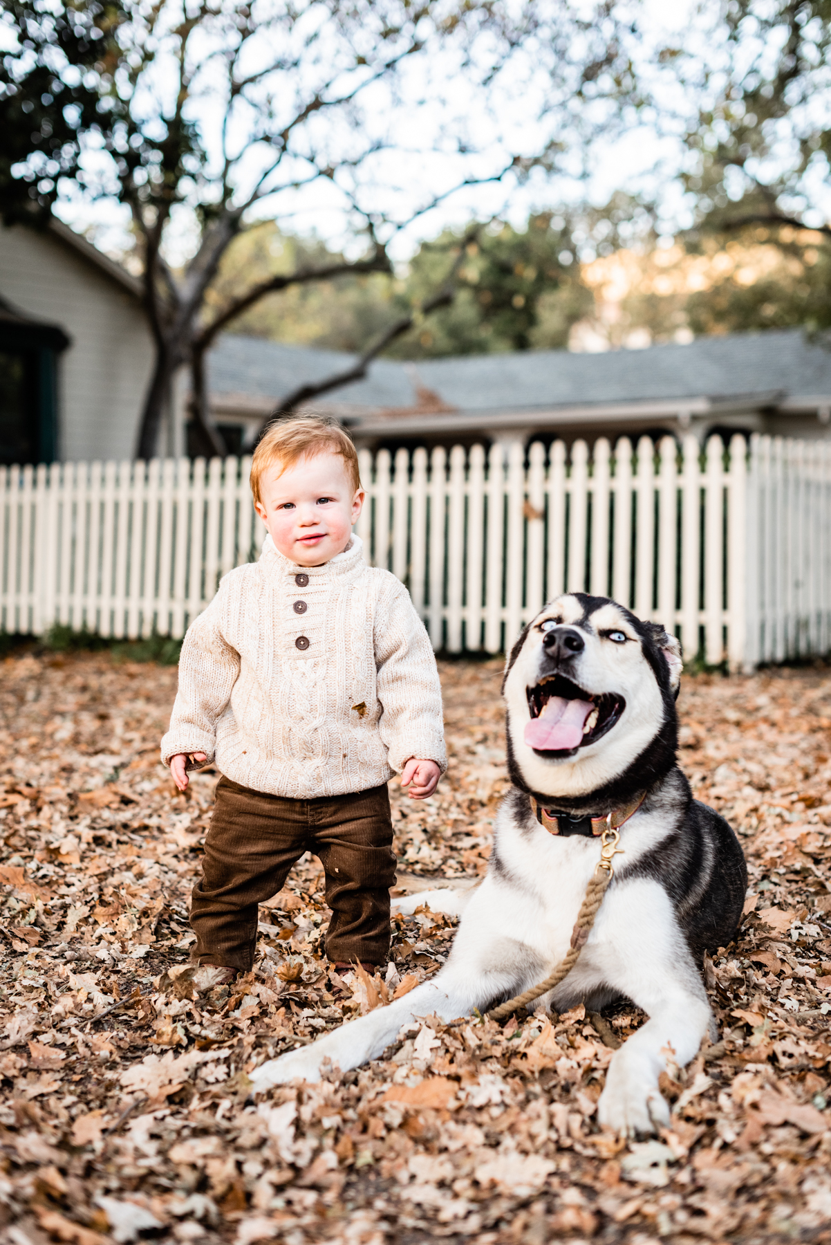Dog and toddler portrait session at Hap Magee Park.