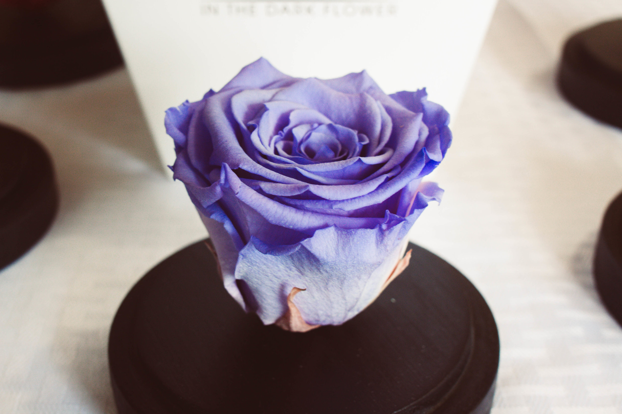 Glass dome – purple rose/glowing green