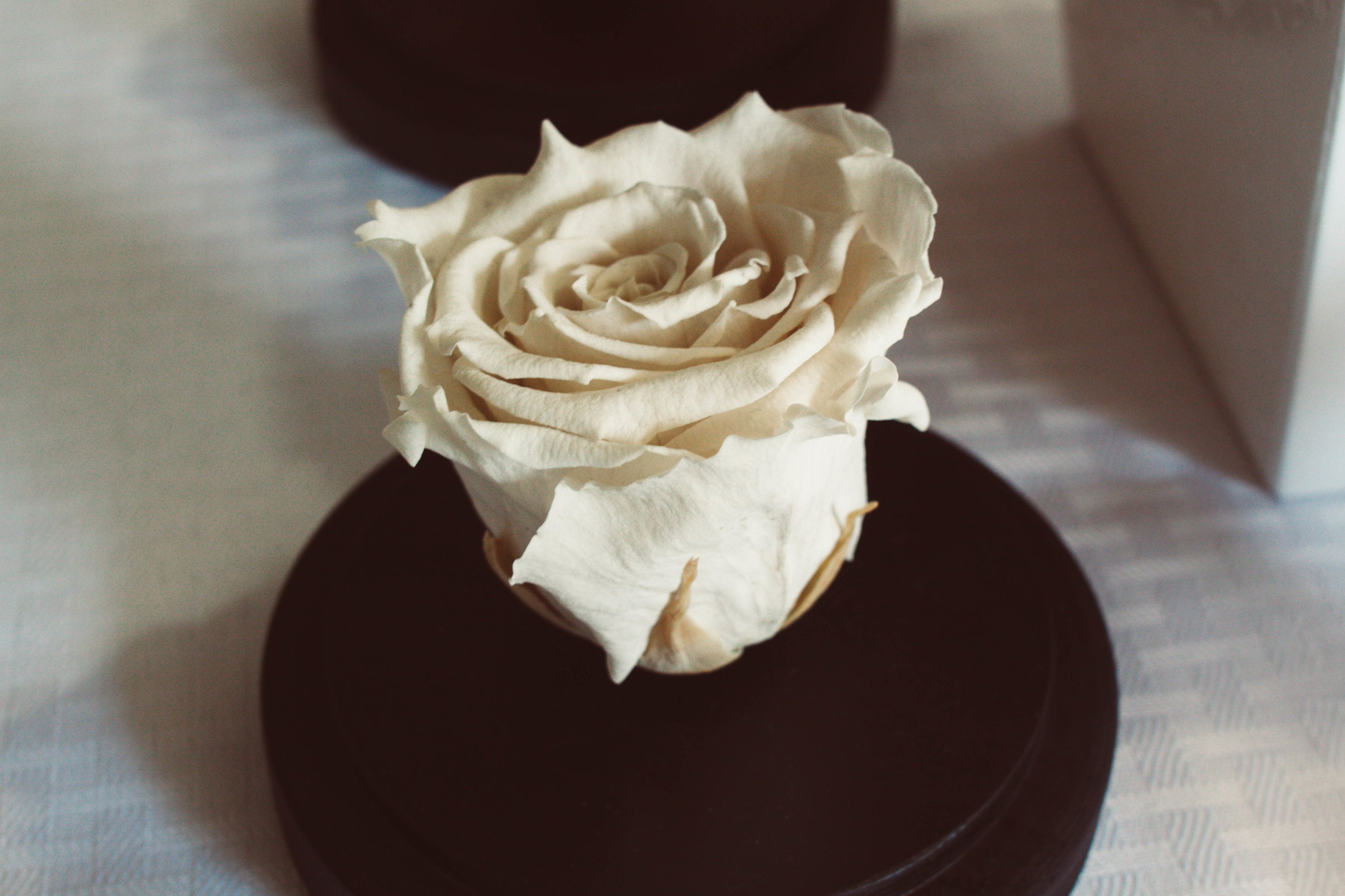 Glass dome – white rose/glowing blue