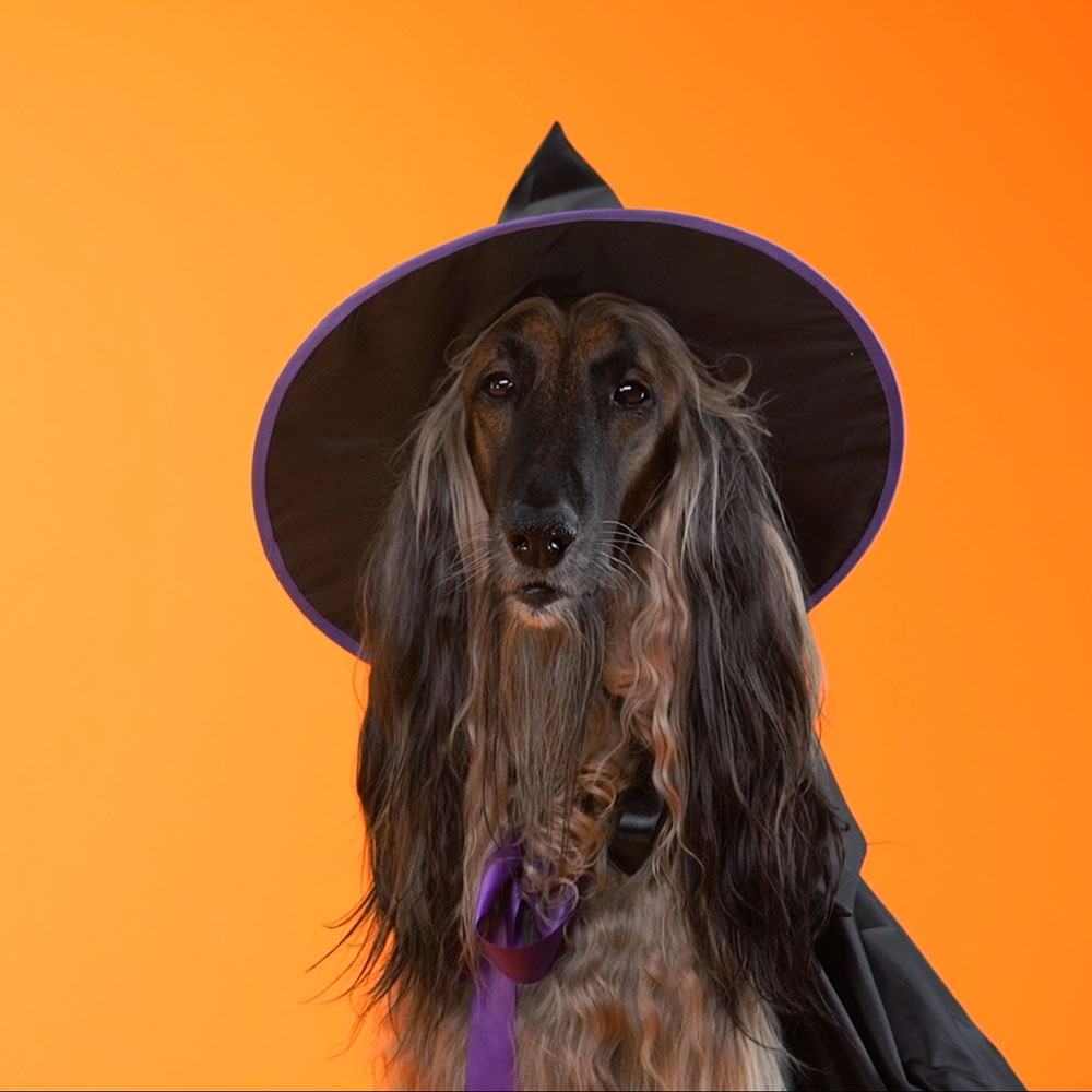 witchdog.jpg