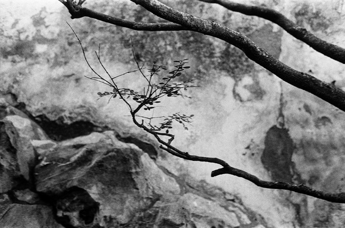 園林裡的枝干 上海豫園 2013年冬  28 x 35.5 厘米/ 51 x 61  厘米