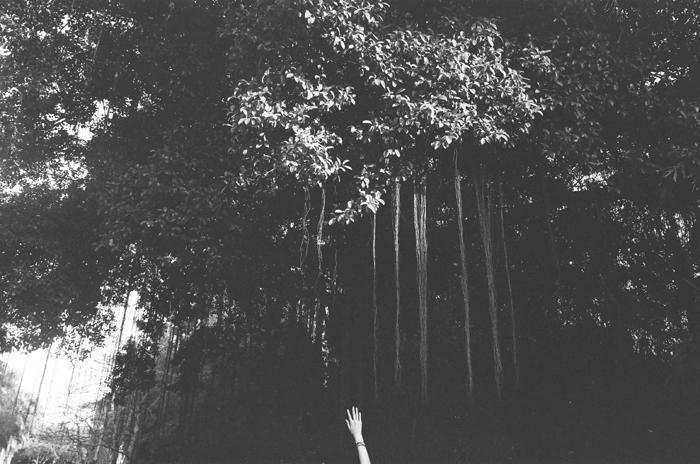 美術館前的榕樹  深圳華·美術館 2015年夏  28 x 35.5 厘米/ 51 x 61 厘米