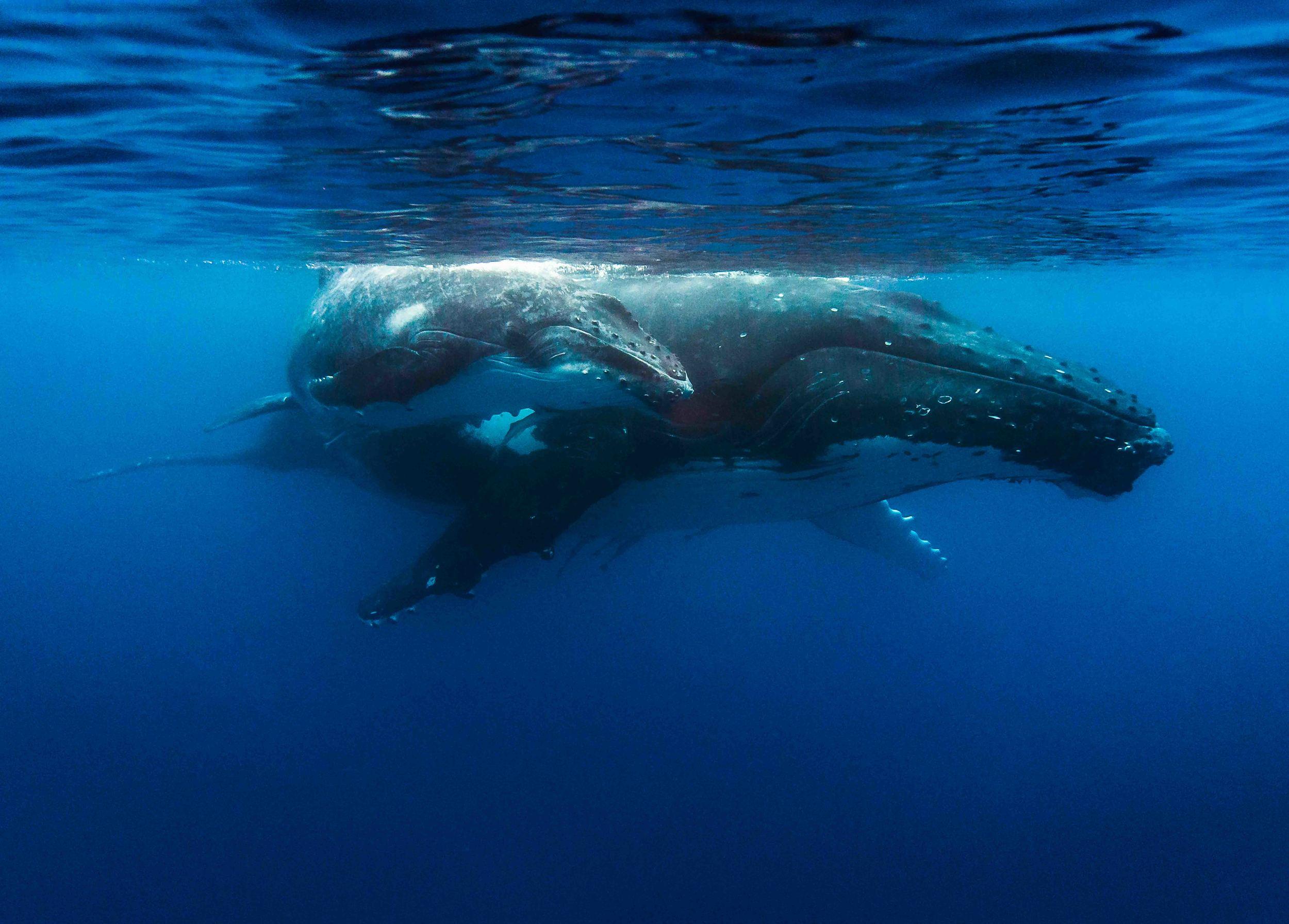 Copy of underwater photography