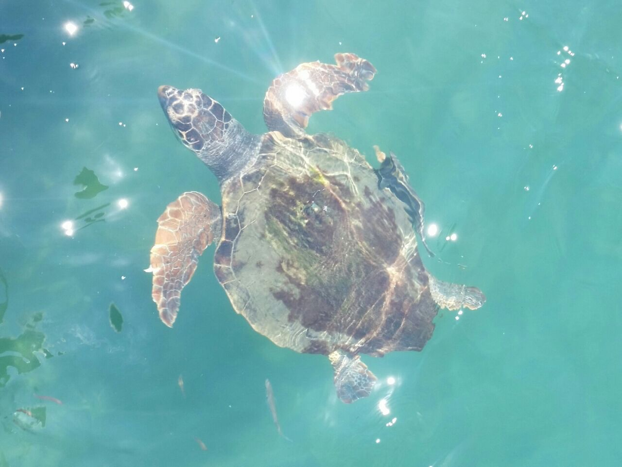 Turtle near the surface in the clear sea