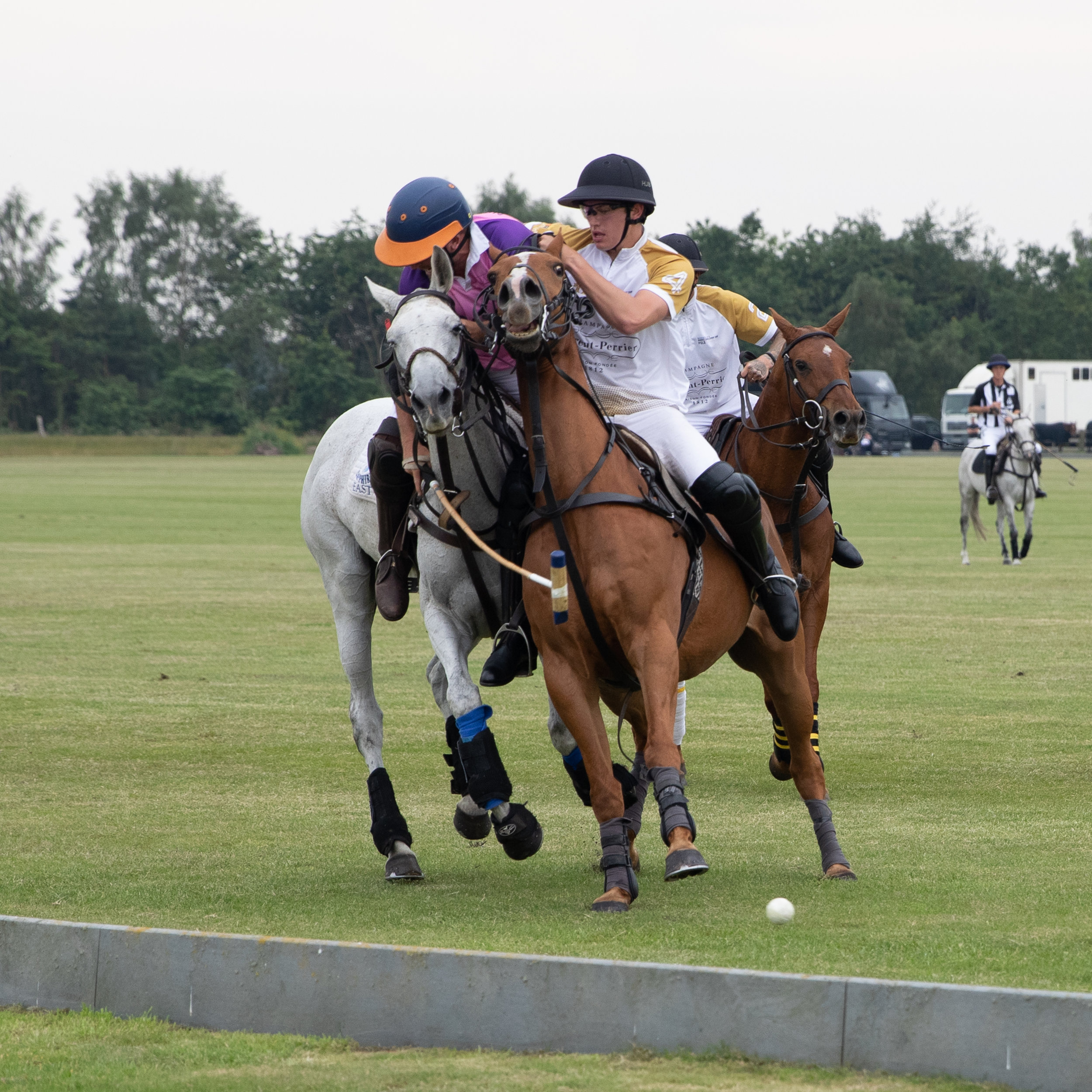 Polo horses clash during Sunday's Hospitality Action's fund raiser at West Cheshire Polo Club