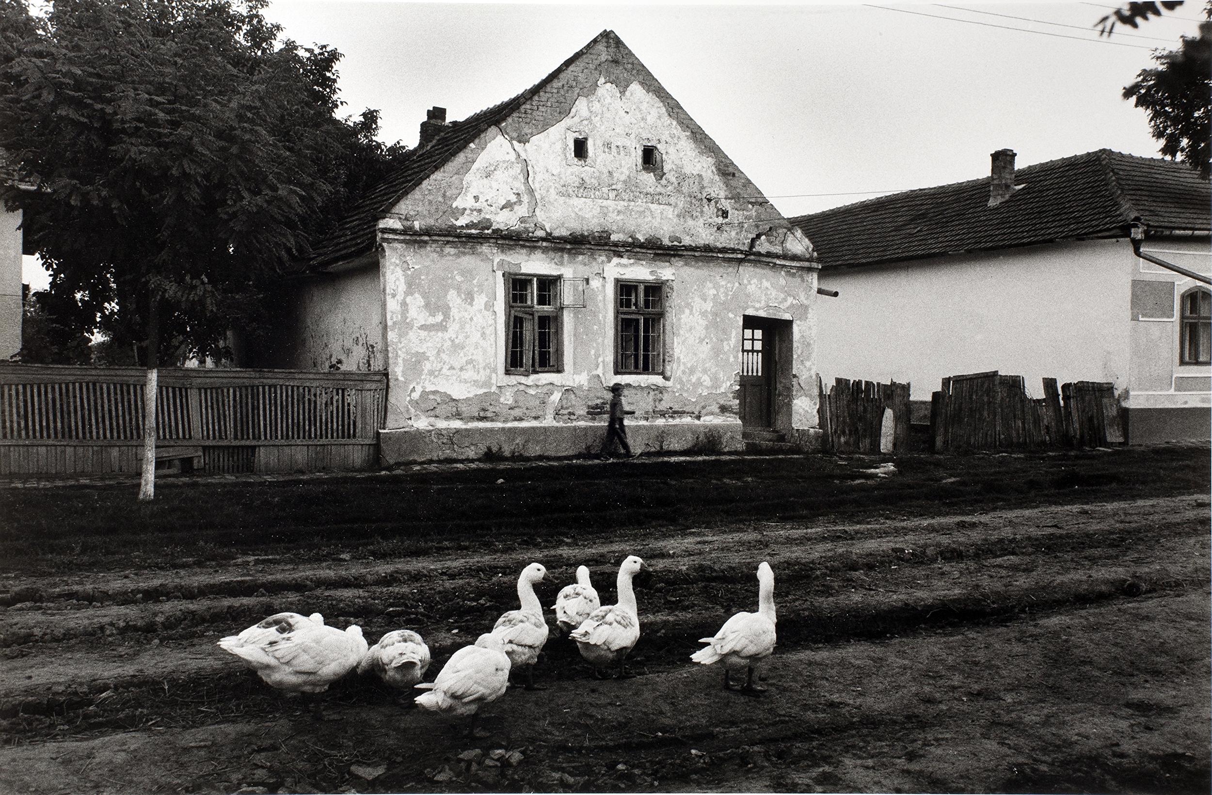 Banat,  near Timisoara, 1988