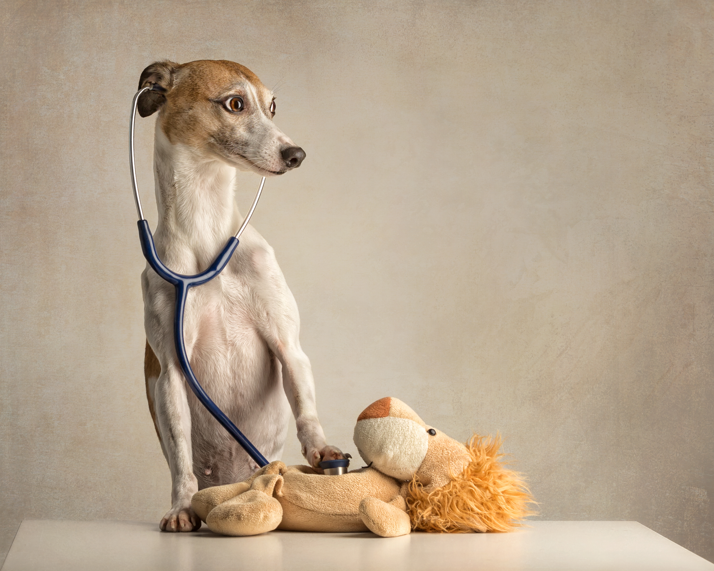 Dog with Stethoscope.jpg