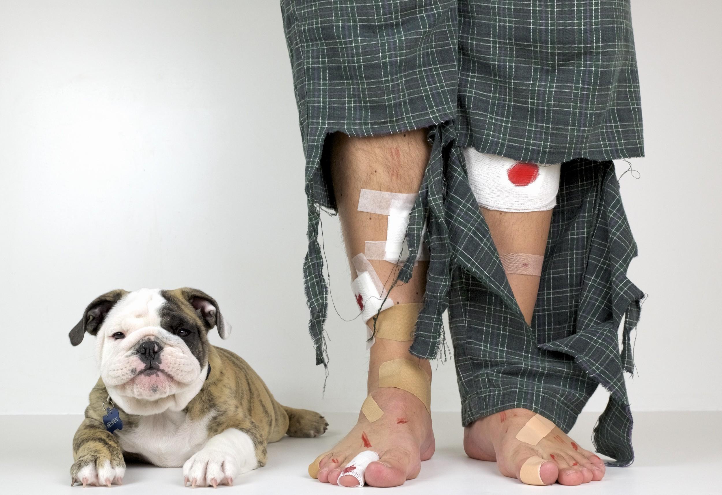 Puppy bandaids.jpeg