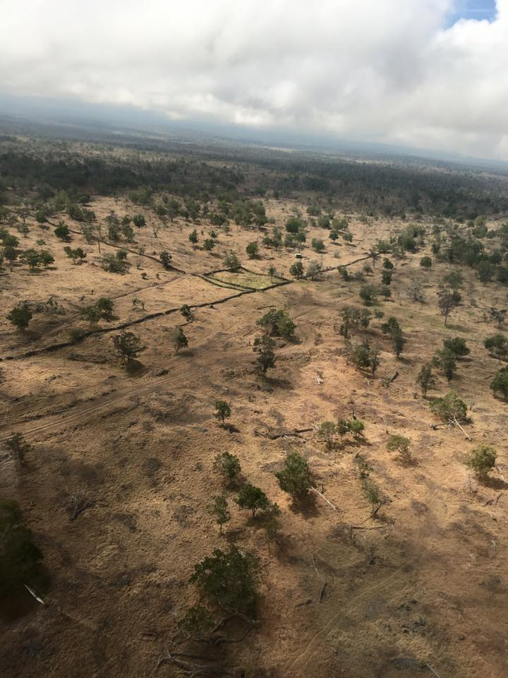 Approaching the farm by helicopter, you can see the damage of ungulate grazing over the past 1 1/2 centuries. Reforestation of the Sandalwood trees and their symbiotic tree counterparts are of top priority. Thanks to the support of YL, Gary, and the market we provide, THIS IS HAPPENING.