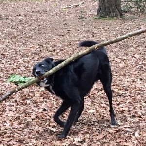 dog with stick.JPG