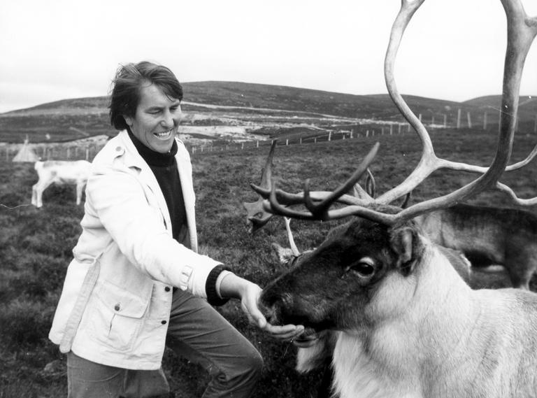 Reindeer herding in the Cairngorms