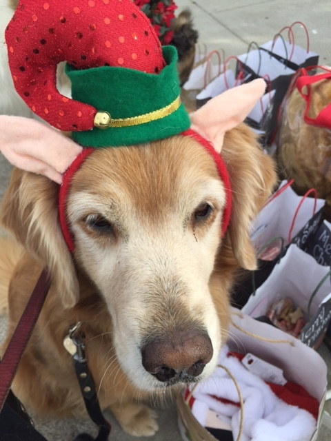 Elf Daisy, ready for her holiday treat!