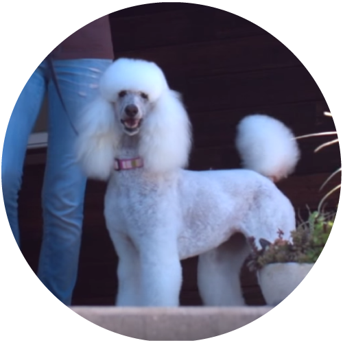 DogZenergy Testimonial1.png