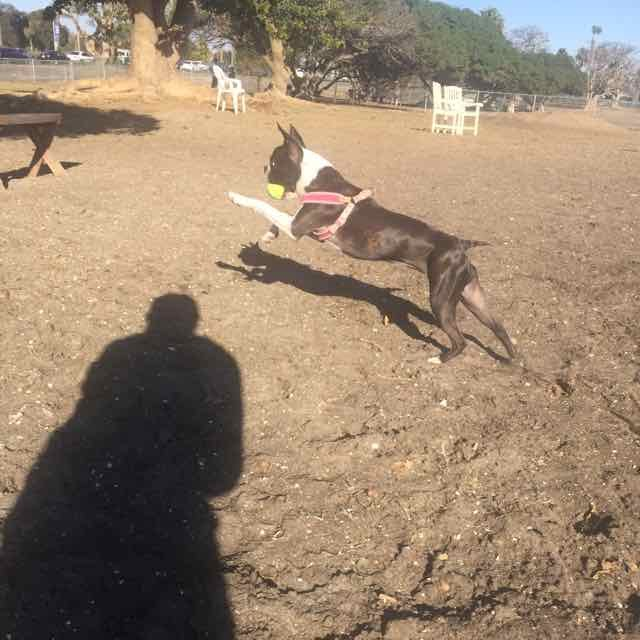 Rosie at Dog Park.jpg