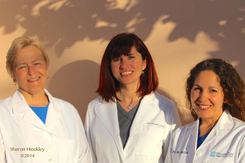 Dr. Jean Spengel, Dr. Lena Stuart and Dr. Dina Raichel