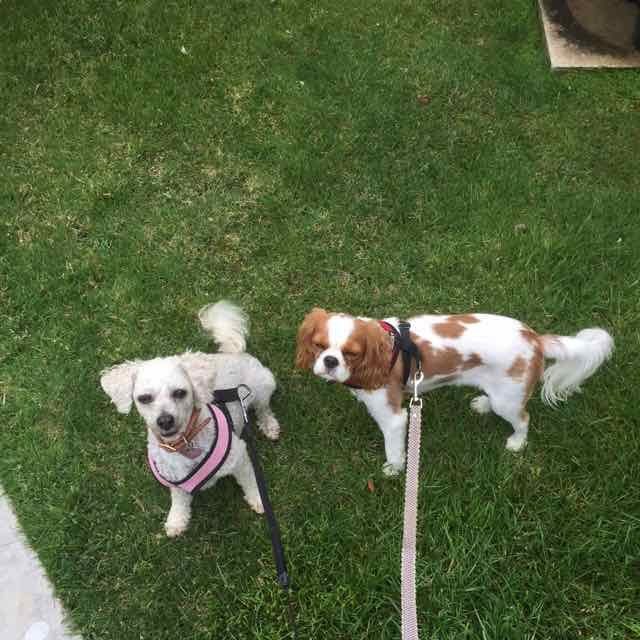 Gracie and Lucy 2.jpg